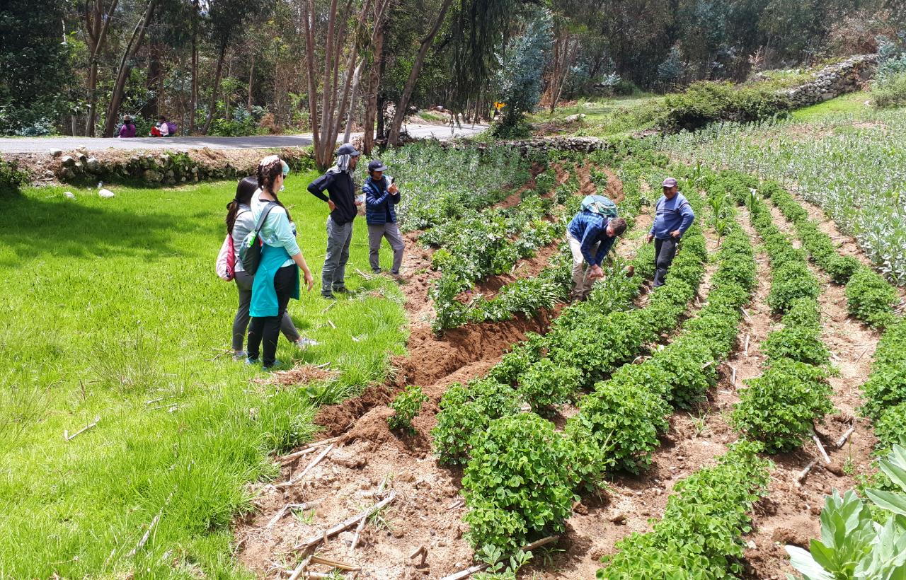 helping quechua a farmer